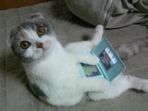 Nintendo Kitty DS