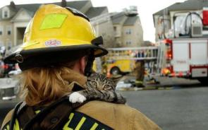 Fire Fighter With Cat