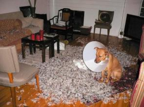 Doggy Disaster