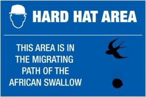 Hard Hat Area- Migrating African Swallow
