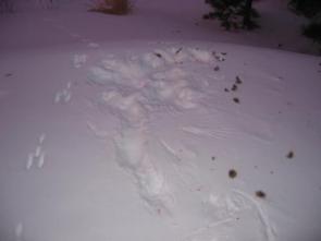 Owl Snowprint Redux