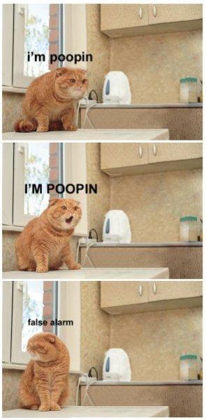 I'm Poopin!