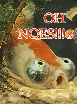 Oh Noes! Goldfish