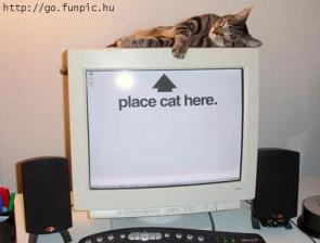 Place Cat Here Wallpaper