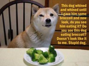 Stupid Dog.  Do Not Want.