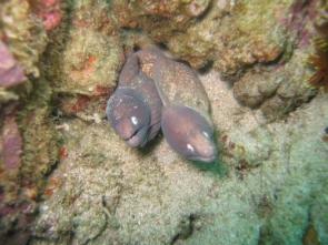 Lovely Eels