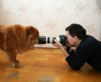 Photographic Pooch