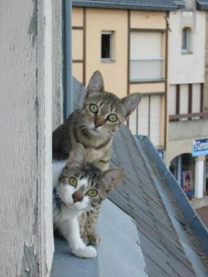 Curious Cats On A Ledge