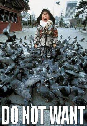 Do Not Want (birds)