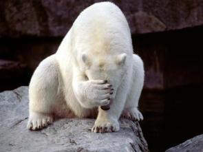 Polar Bear Has No Apples