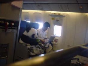 Airplane Panda
