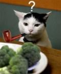 Broccoli Cat