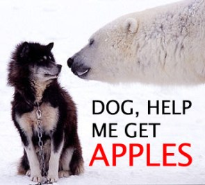 Dogs, Get Me Apples