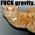 Fuck Gravity Cat