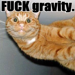 Fuck Gravity Cat