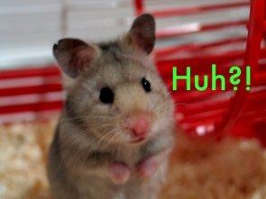 Hampster Huh?!