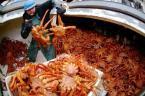 Sea Of Crabs