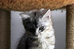 Sinister Cat
