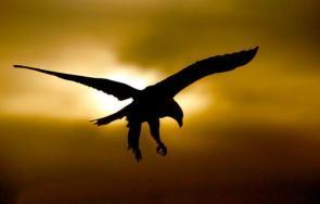 Sun Bird