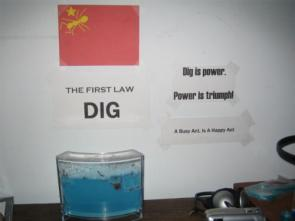 Dig is power.  Power is triumph! A Busy Ant Is A Happy Ant