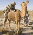 How Not To Mount A Camel