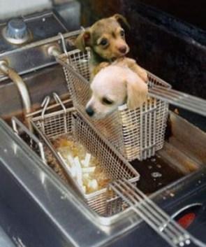 Puppy Fries