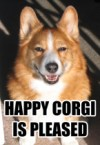 Happy Corgi is Pleased
