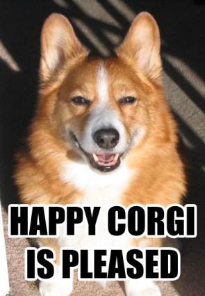 Happy Corgi is Pleased