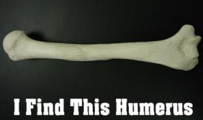 I FInd This Humerus