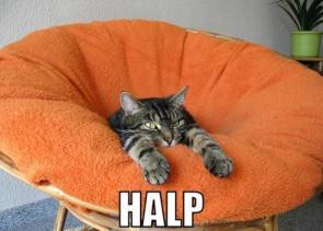 Halp A Kitty