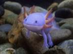 Purple Creature Eater