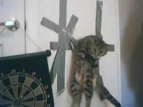 Tape Cat