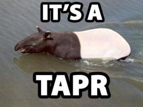 It's A Tapr