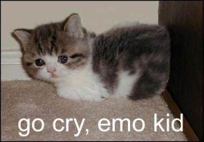 go cry, emo kid / kitten
