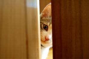 Cat Peeping Through Door Crack