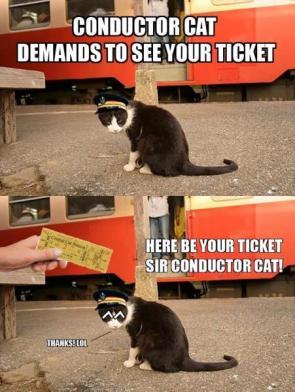 Conductor Cat