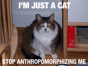 I'm just a cat, stop anthropomophizing me