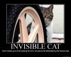 Invisible Cat