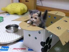 Cute Kitten In A Box