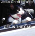 Jesus Christ it's a lion, get in the car