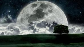 Moon Over A Tree Wallpaper