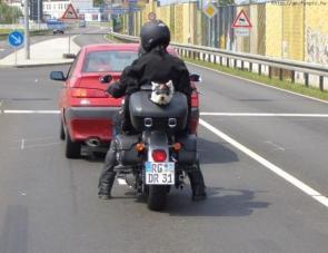 Doggy Biker