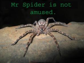 Mr Spider Is Not Amused