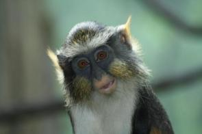 Crazy Scary Monkey