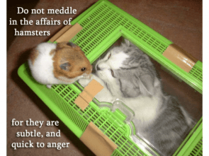 do not meddle in the affairs of hamsters, for they are subtle and quick to anger