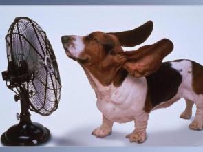 Floppy Eared Dog in front of Fan