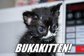 Buka Kitten