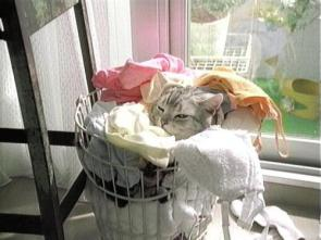 Cat in hamper