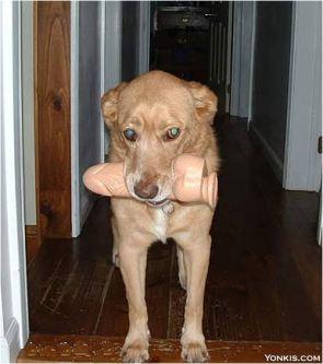 Dildo Doggy Toy
