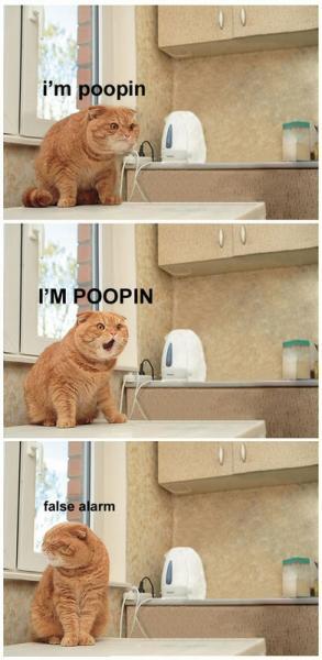 Poopin Cat